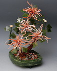 Pink Salmon Branch Coral and Green Spinach Jade Jewel Tree