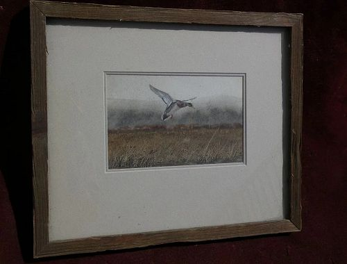 Signed wildlife art fine detailed contemporary original watercolor painting of flying male mallard duck