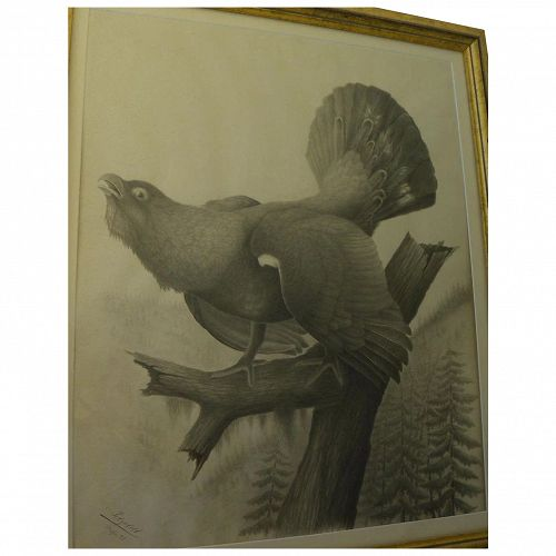 German 1928 amazingly detailed sporting art watercolor drawing of game bird signed Petzoldt