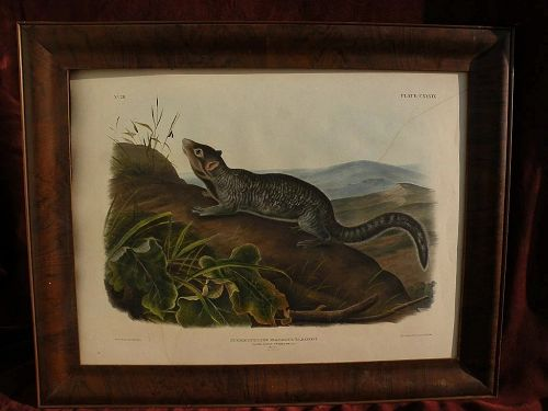 Original edition JOHN WOODHOUSE AUDUBON (1812-1862) Imperial size 19th century lithograph of small mammal plate 139