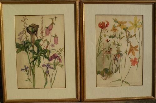 Original botanical art PAIR 1907 watercolor paintings of flowers