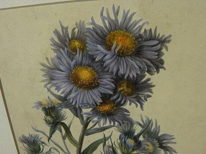 Botanical art amazingly detailed original watercolor painting of wildflowers