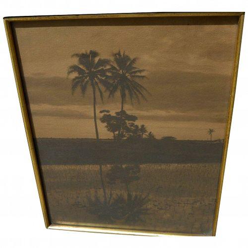 Hawaiiana sepia toned photo of palms in a landscape framed circa 1930