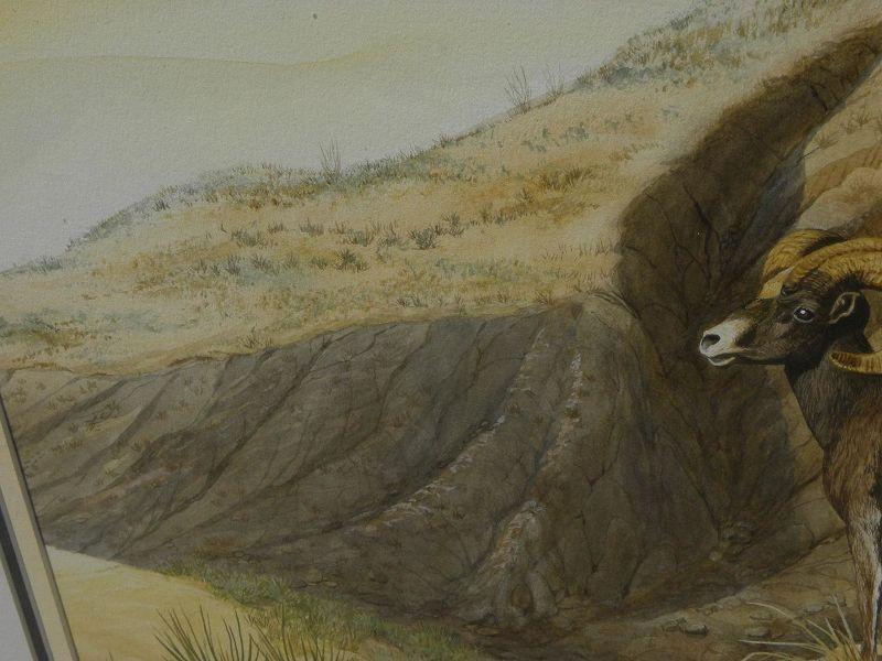 Wildlife art fine contemporary watercolor of desert bighorn sheep by artist Bill Roach
