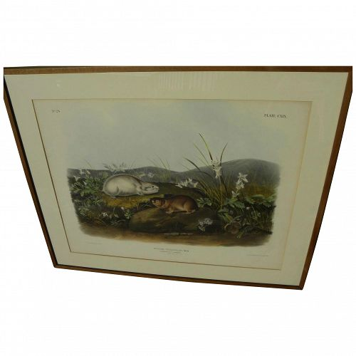 JOHN J. AUDUBON (1785-1851) original 19th century large folio lithograph print of quadruped mammals