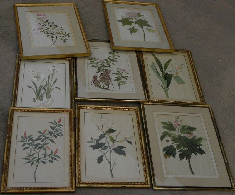 EIGHT early 19th century ORIGINAL botanical drawings exquisite detail NOT PRINTS