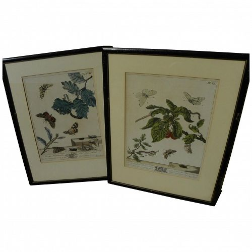 Pair of insect engravings by English entomologist illustrator artist MOSES HARRIS (1731-1785)