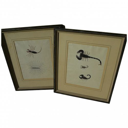 PAIR 19th century detailed original drawings of scorpions and other insects