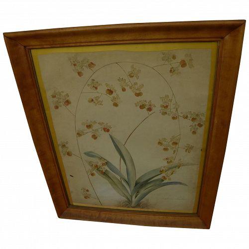 Original English botanical drawing signed T. Allport dated April 1834
