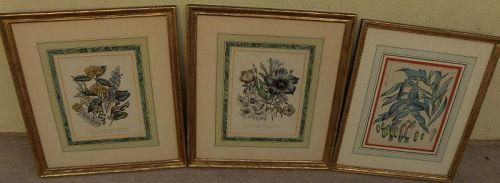 Antique English botanical prints in quality frames (three)