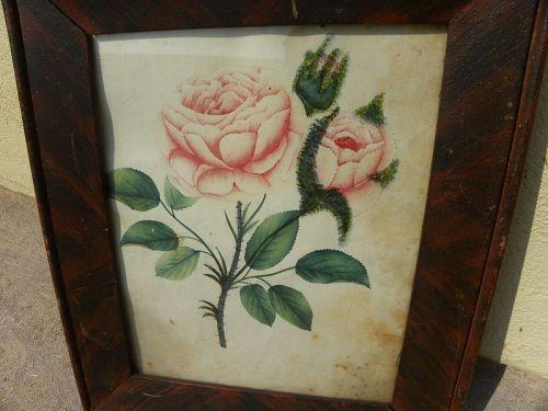 American antique folk art botanical drawing flowers circa 1840