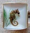Seahorse Cuff Links - Real Sea Horse Under Glass