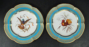Antique Coalport Ornithological Hummingbird Plates