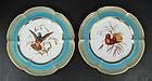 Antique Coalport Ornithological Hummingbird Plates