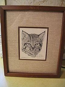 Bobcat Kitten Print