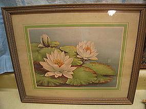 Vintage Lotus Print
