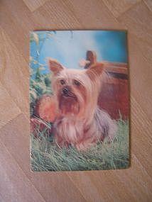 Vintage Dog Card