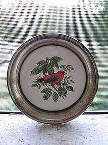 Silver Bird Coaster