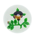 Baccarat Dupont Pansy Glass Paperweight
