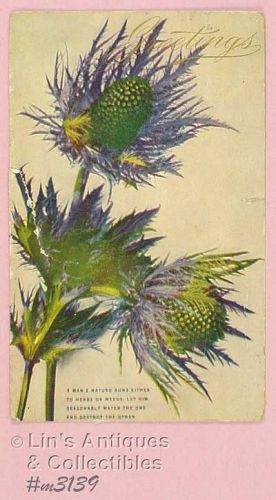 GREETINGS VINTAGE POSTCARD POSTMARKED 1908