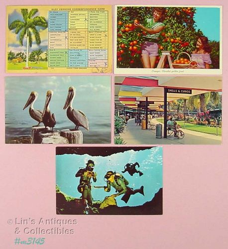 LOT OF FIVE FLORIDA SOUVENIR POSTCARDS