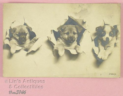 VINTAGE MADE IN GERMANY POSTCARD OF THREE PUPPIES POSTMARKED 1907