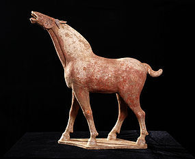 Wonderful huge tang dynasty horse