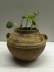 Very cute hand dynasty small pot