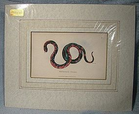 KEARSLEY MOURNING SNAKE COPPER PLATE PRINT 1802 Hand Colored