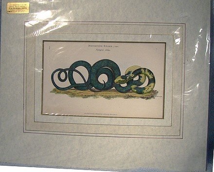 KEARSLEY Tojuque Seba SNAKE COPPER PLATE PRINT 1801 Hand Colored