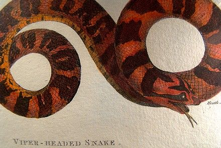 Antique Kearsley Hand Coloured Snake Copper Plate Engraving Print 1801