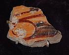Pre-Columbian ~ MAYAN ~ Shard Pendant