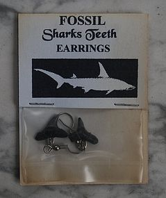 Pair of  SHARK Teeth Earrings ~ Miocene Age ~ Florida