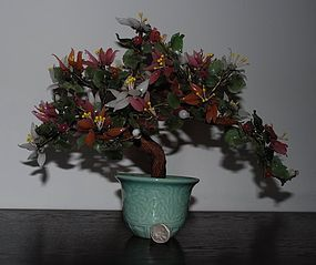 Colorful Chinese ~ JADE ~ Bonsai Plant