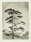 George Elbert Burr, etching, The Sentinel Pine,