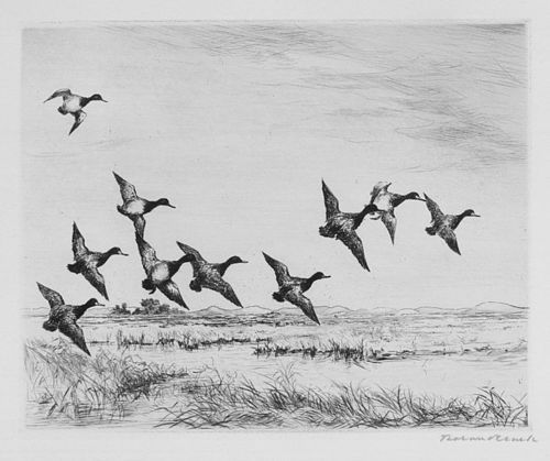 """Little Bluebills"", etching, Roland Clark, 1927."
