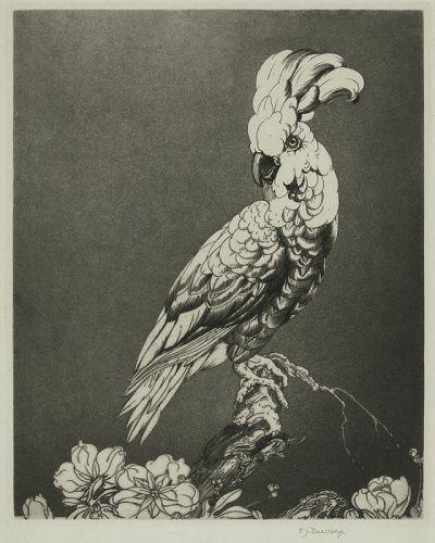 Edward Detmold etching, Cockatoo
