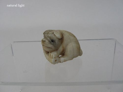 Japanese Netsuke of a Puppy by Ranichi, Signed