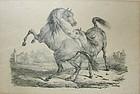 Carle Vernet Lithograph-Horses Fighting-L.Turgis Paris