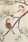 Japanese Woodblock Print Ashikaga Shizuo Pine Benimashiko Finch Kacho