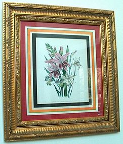 Hand Colored Botanical Print Jane Webb Loudon