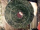 China jade bi disc