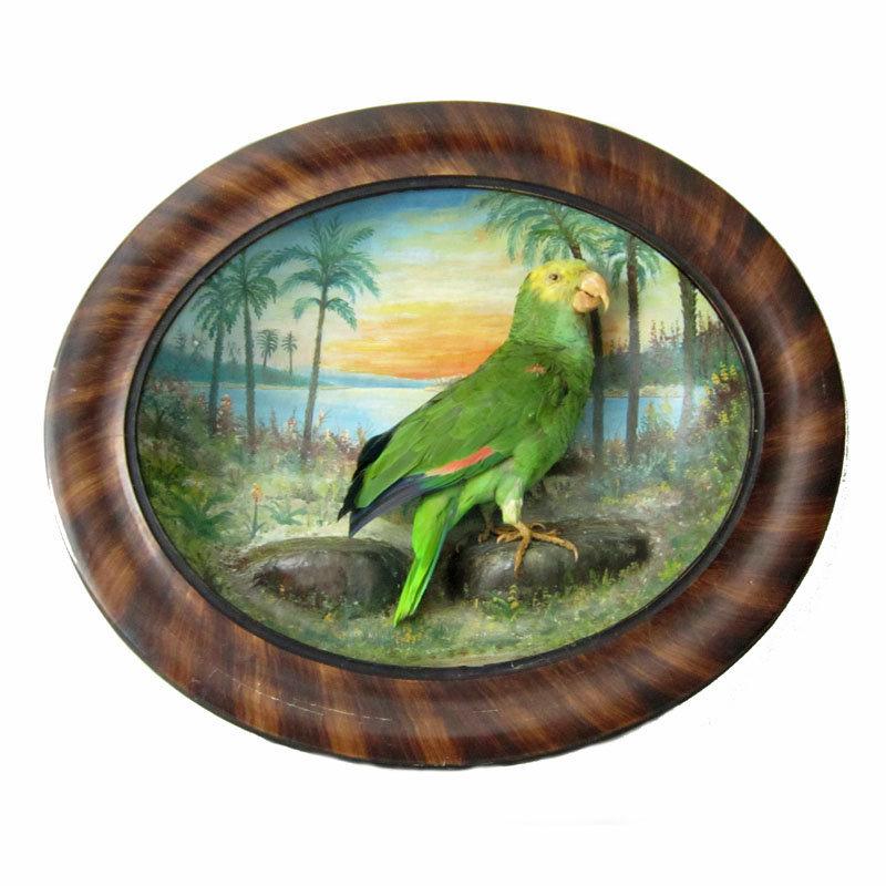 Framed Parrot Diorama