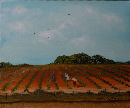 Tobacco Field by Helen LaFrance