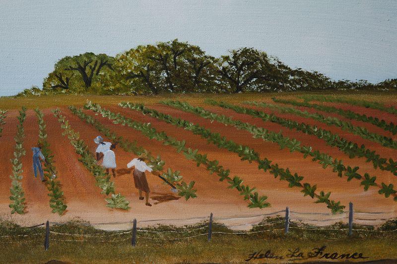 Tobacco Field by Helen LaFrance