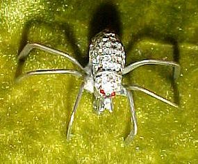 Marcasite  silver spider pin