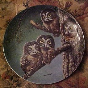 Knowles Beginning to Explore Boreal owls 6th plate