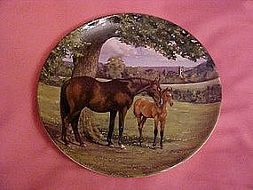 English Thoroughbred, Spode, By Susie Whitcomb