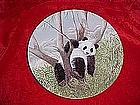 A Lazy Afternoon, The secret world of the Panda, plate