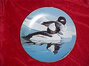 Buffleheads,Natures Heritage, American Waterfowl